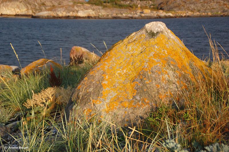 Sten övervuxen med lavar