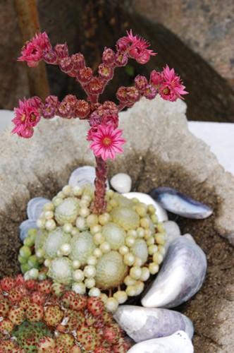 blom-uppstickare