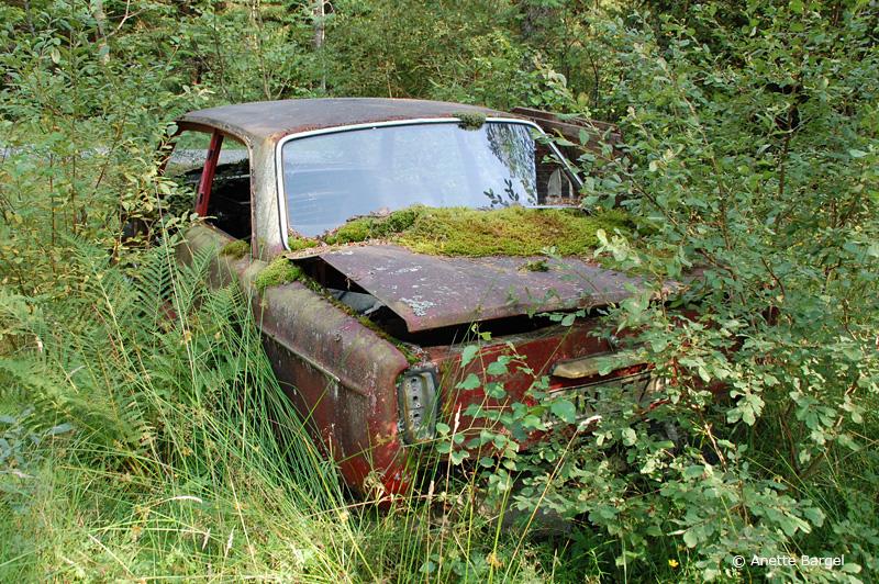 Kvarglömd bil i skogen