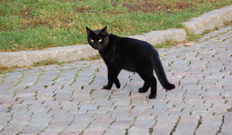 svart katt går över gatan