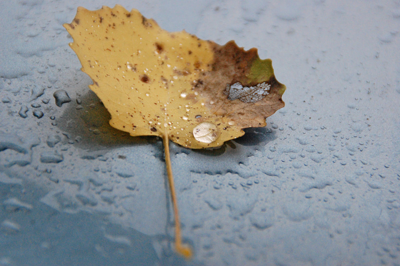 Droppe höstlöv