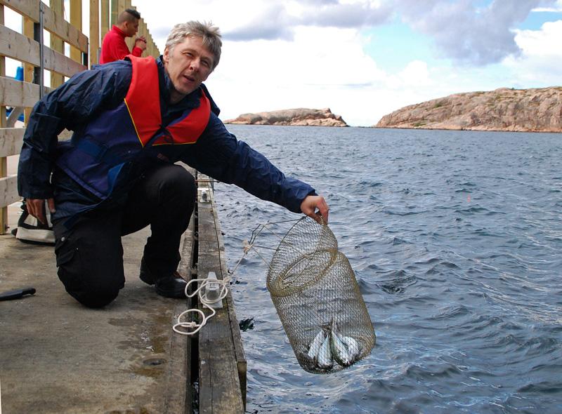makrillfiskare bohuslän lysekil