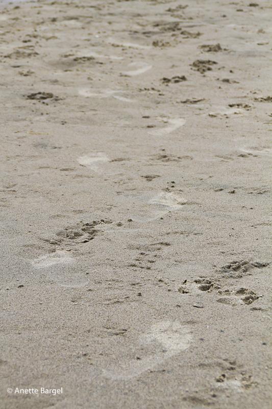 Fotspår sandstrand