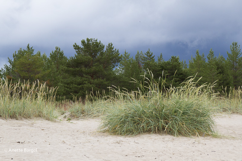 sanddyner piteå sandstrand