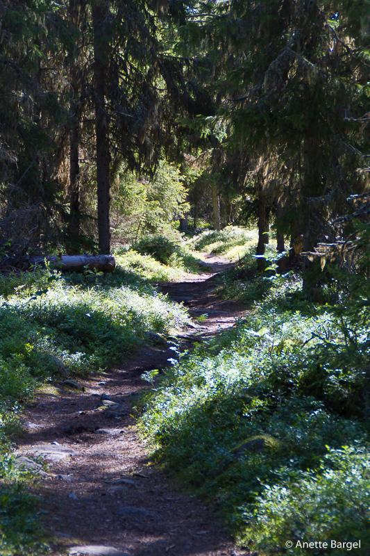 skogsstig i Luleå skärgård