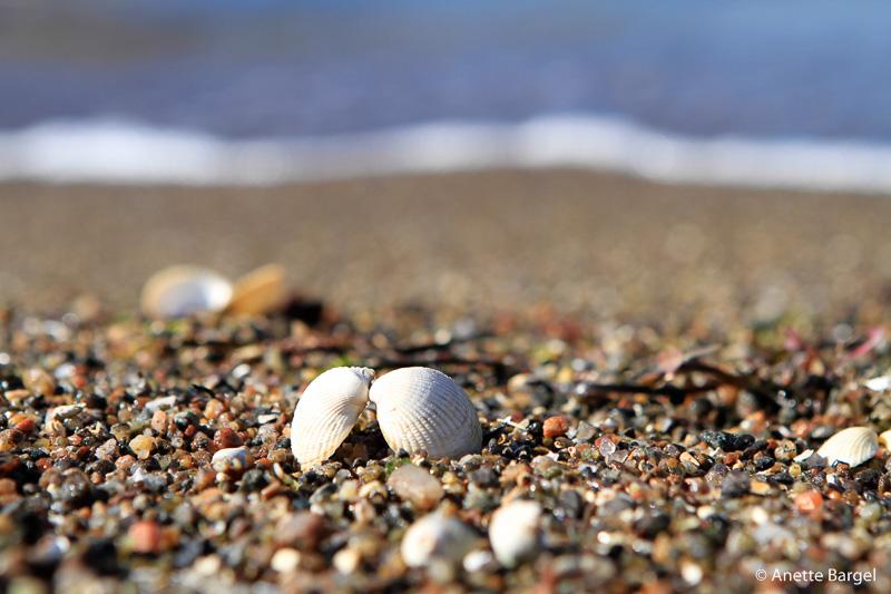 snäckor på strand i bohuslän