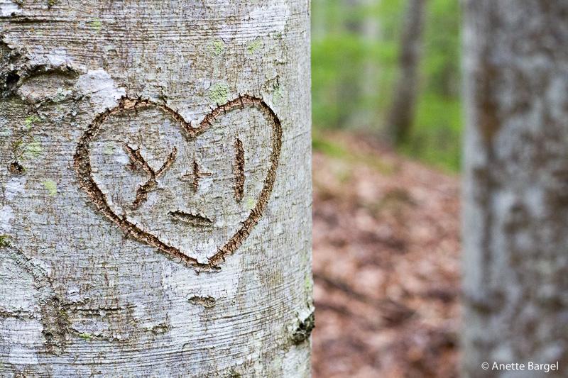 träd med skuret hjärta