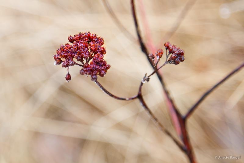 blomma på skaft