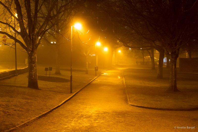 dimma i park