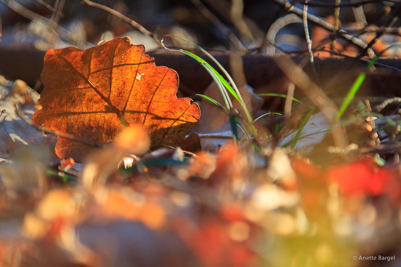 solblad och färger
