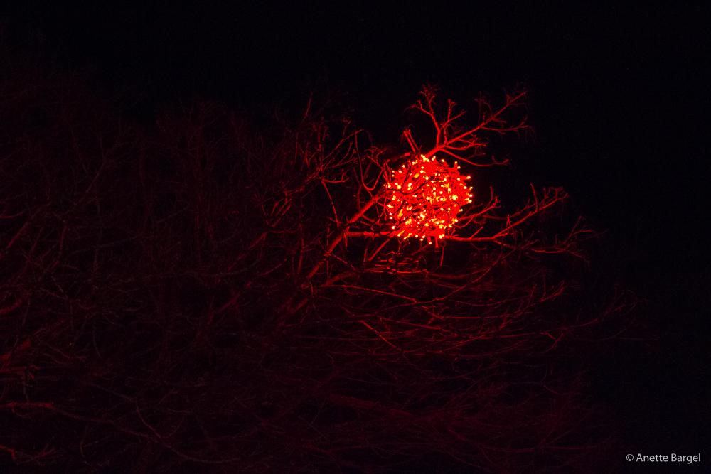 lampor i träd